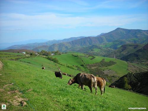der Camino de Santiago