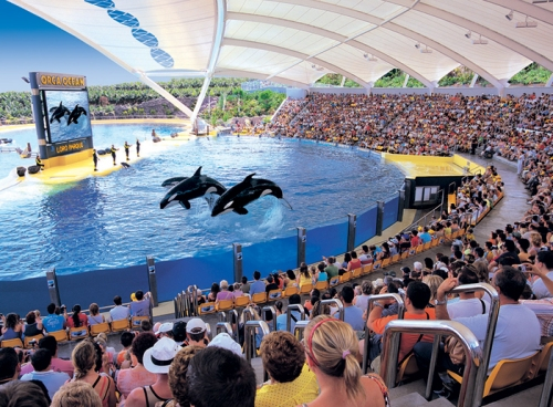 umstrittene Orca Show
